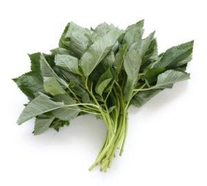 Egyptian Molokhya, Mulukhiyah, or Molokhia is simply the leaves of the plant Corchorus olitorius